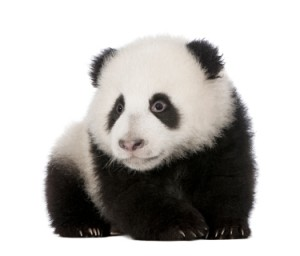 Google Panda Becomes Permanent - SEO News